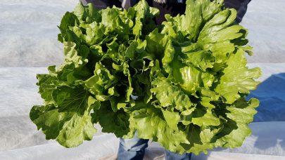 111 salat gerdnlr 42195413401